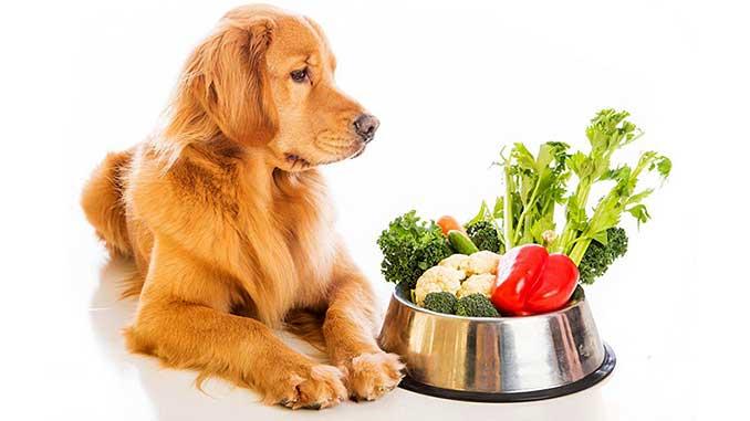 Гипоаллергенные корма для собак