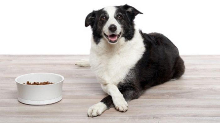 Какой корм самый лучший для Вашей собаки