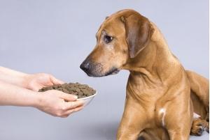 Как перевести собаку с натурального корма на сухой